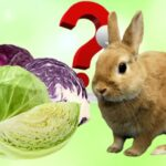 Can Rabbits Eat Cabbage? — How Often, Benefits and Risks