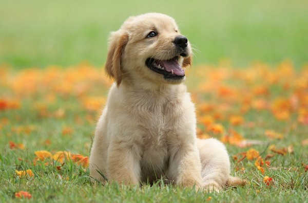 Dog Breeds That Do Not Shed Hair: What Dogs Do Not Shed?