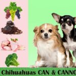 What Can Chihuahuas Eat? Feeding Guide & Care