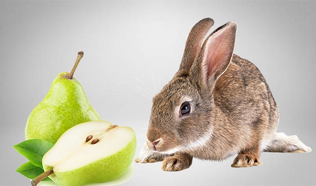 Are Pears Poisonous to Rabbits?