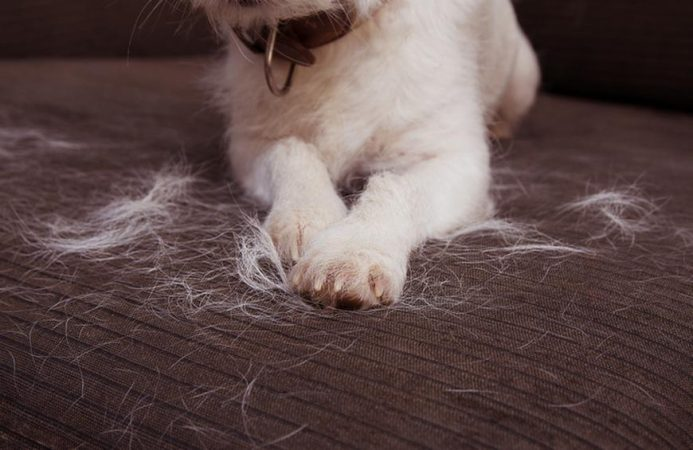 Why dog's hair fall out
